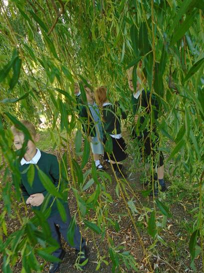 Willow tree fun