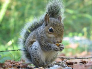 Squirrel Class - Attendance Term 1 2017 =