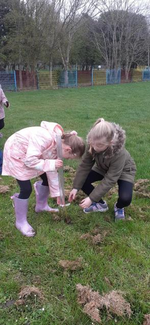 Helping each other to get the roots well covered.
