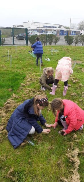 Planting trees for future generations to enjoy.