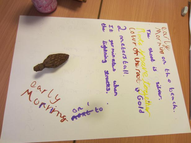 Discovery day - we studied African seeds!