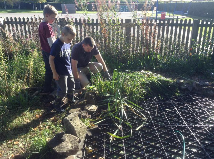 Cleaning the wildlife pond