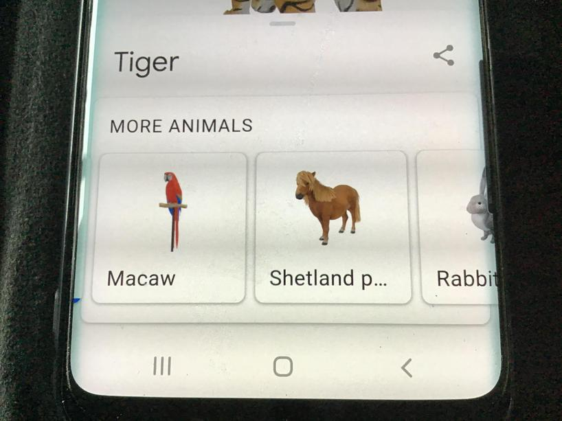 Have a look at what other animals you can see.