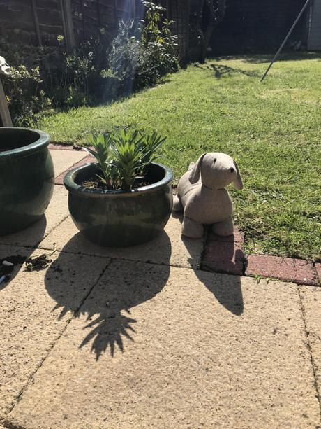 Teddy is NEXT TO the plant pot.