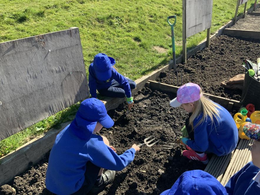 Planting seeds and bulbs.