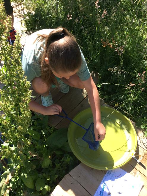 Pond dipping - we found a lots of pond life!