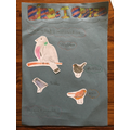 Laci's bird spotting poster