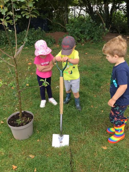 Planting our apple tree