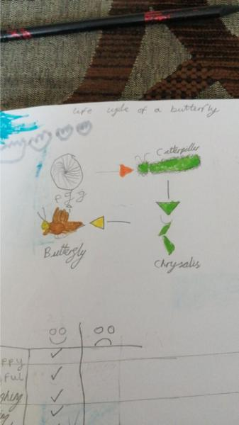 Roby's fabulous butterfly life cycle!