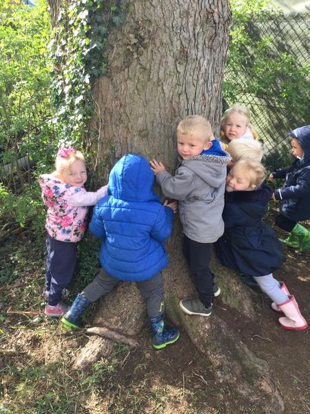 Getting to know our trees