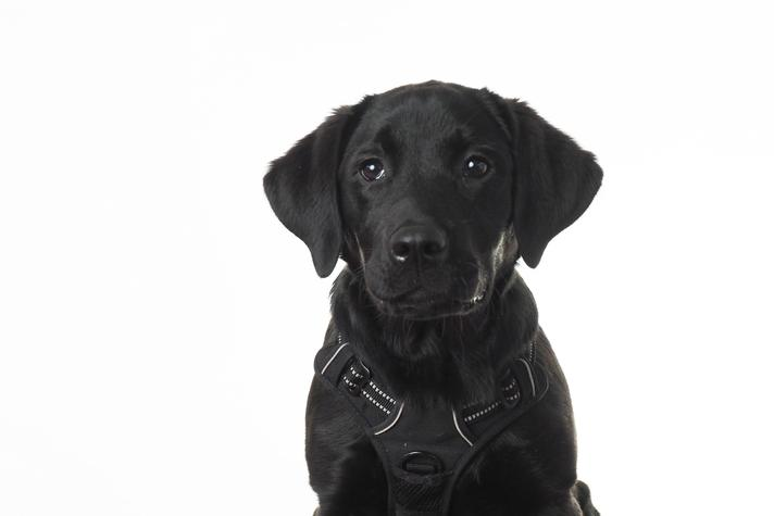 Josie Bryan, Our School Dog and all round team player!
