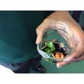 Composting virtual lesson