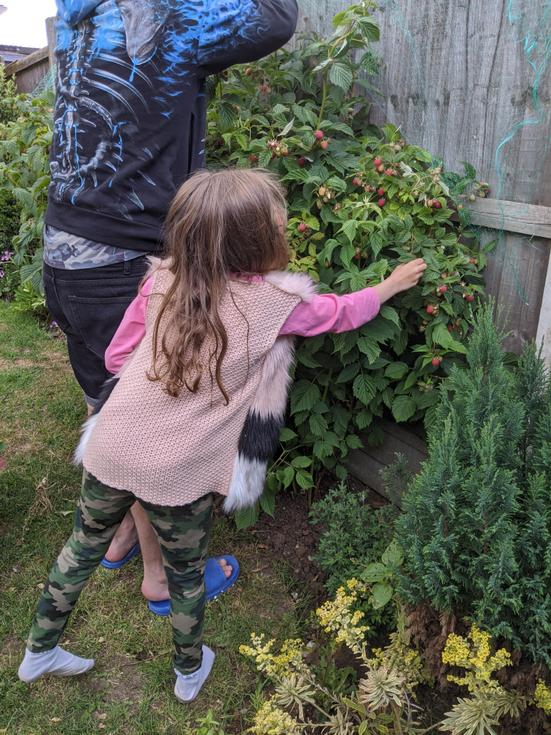 Great raspberry picking Tia and dad!