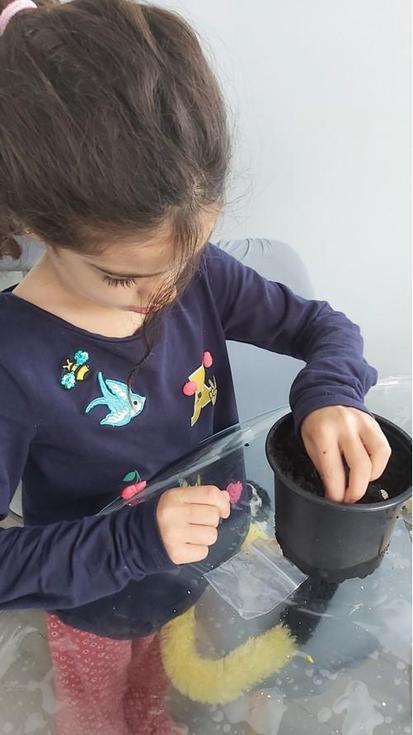 Iris planting seeds