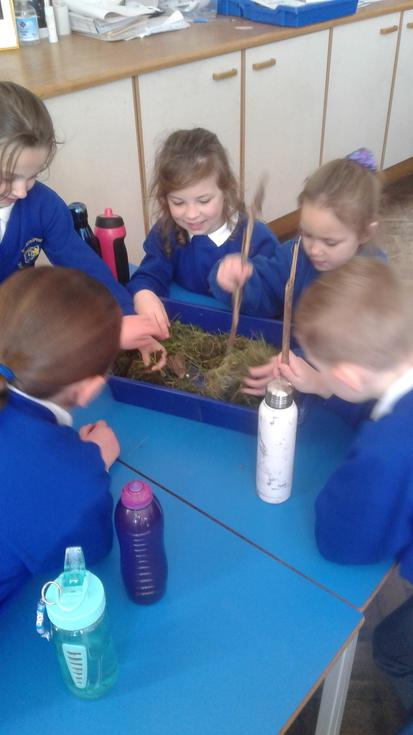 Easter garden competition