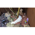 Ella's fairy garden