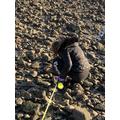 Ale on her beach walk