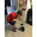 Freddie dog training
