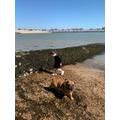 Jorgie exploring the beach