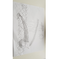 Dylan has created a beautiful line drawing using different patterns with his pencil