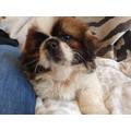 Taylor-James's new puppy, Oreo!