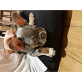 Meet Frankie!