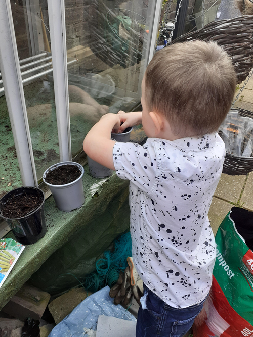 Planting vegetable seeds.