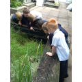 We went to the school ponds to look for tadpoles.