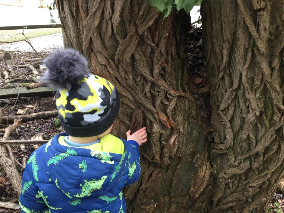 Looking closely to match bark. 'It's a zig zag!'