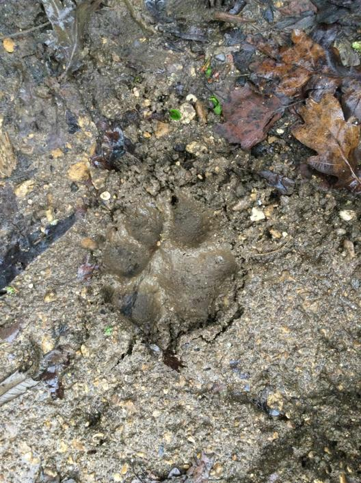 'Look, a footprint in the squelchy mud!'