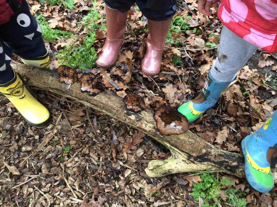 'Look what we found. What is it?' Learning about fungus