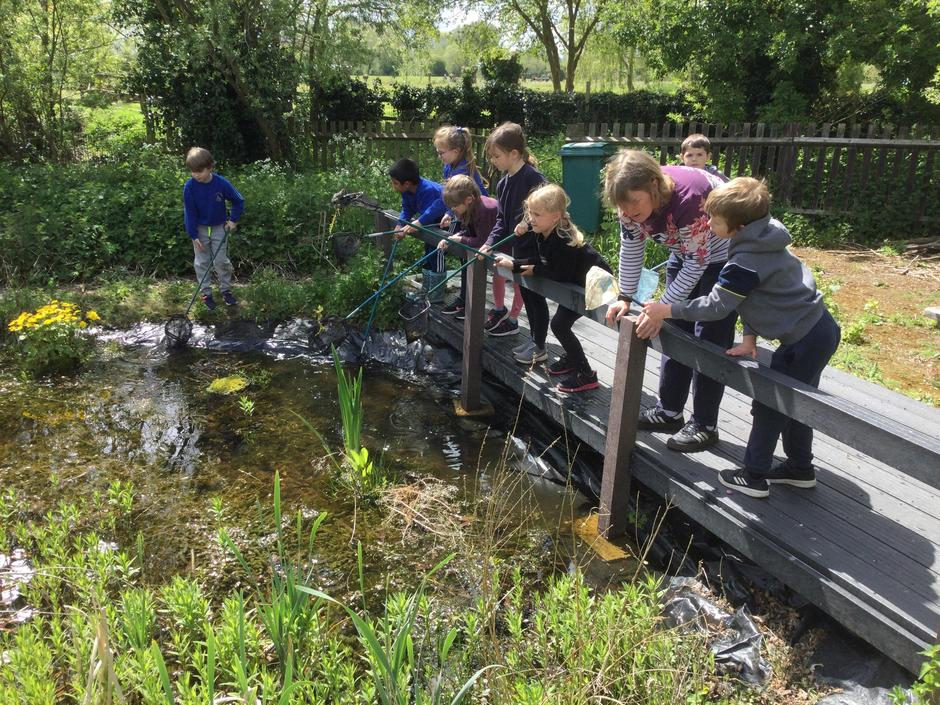 Which animals live in our school pond?