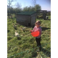 Alice is looking after rescue hens :)