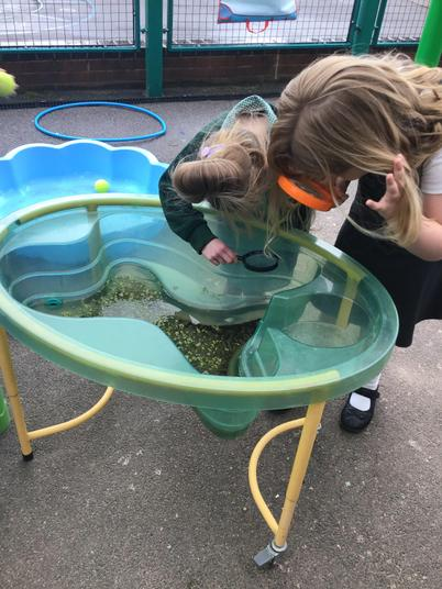 We found lots of curious creatures on our pond