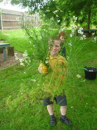 Huge weed!