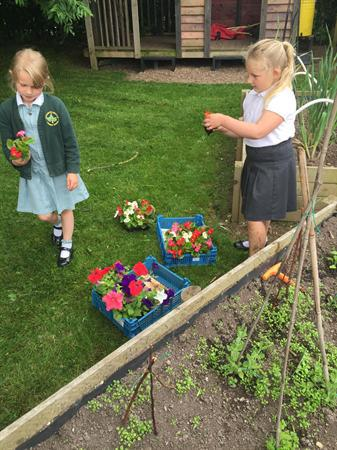 Making our flower garden
