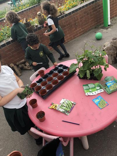 This week we have been planting our seeds.