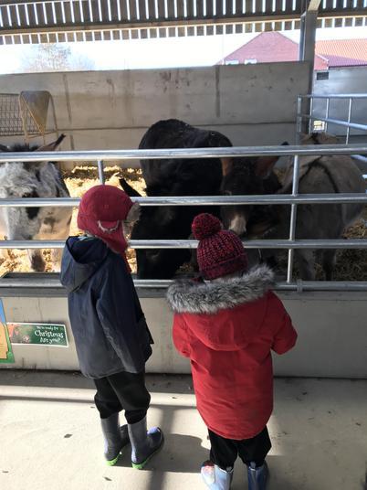 We fed the animals.