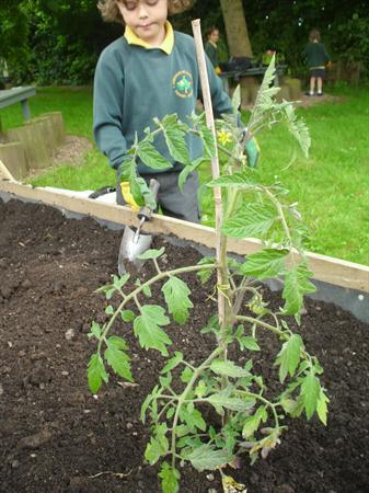 Great planting!