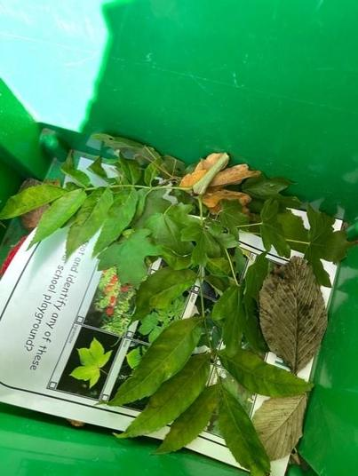 We collected some to look at in class