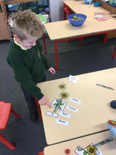 Fabulous work - you can label parts of a flower!