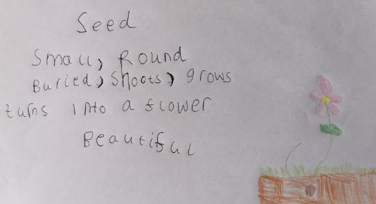 Cinquain poem based on 'The Tiny Seed'