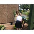 Thoresby Class planting shrubs