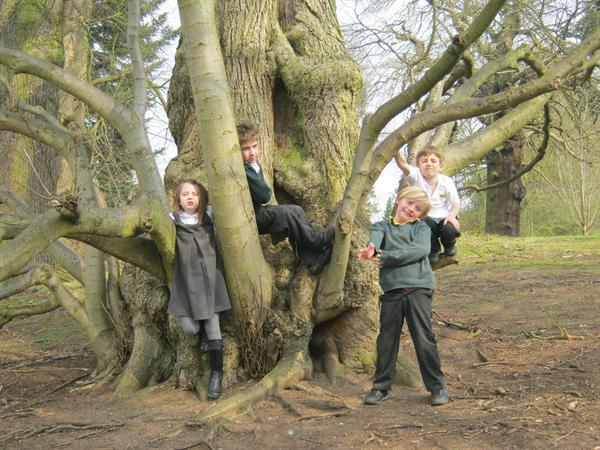 What an interesting tree! We enjoyed sketching it