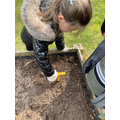 We planted sunflowers