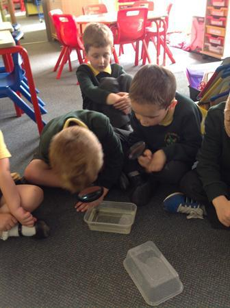 Looking carefully at our tadpoles