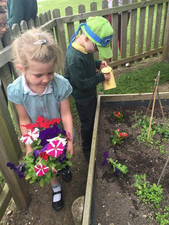 Planting Petunias!