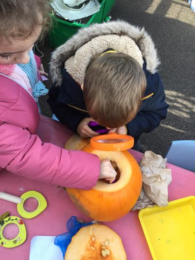 We became inspectors and dissected the pumpkins!