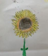 Observational drawing of a Sunflower