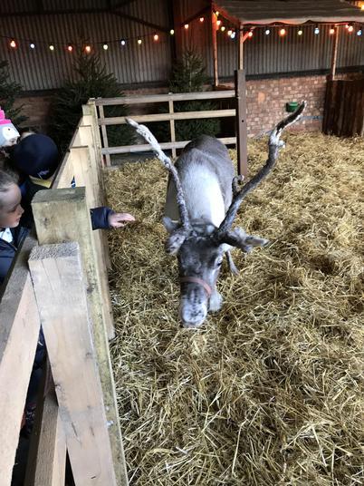 We found two beautiful reindeers.